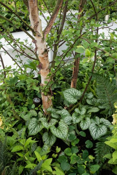 Use variegated leaves to add light and interest