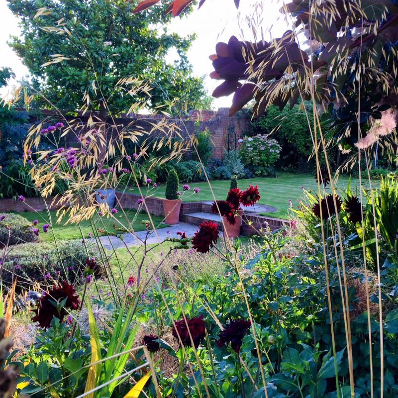 Stipa Gigantea and Dahlia 'Black Cat'