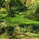 Vasterival gardens transparent pruning