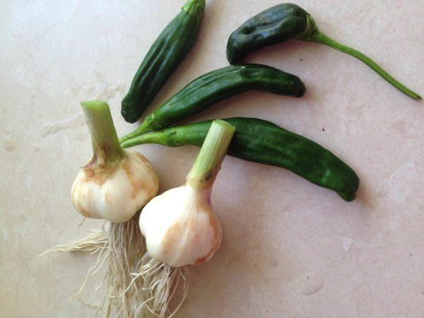 Garlic is one of the ten best vegetable varieties to grow