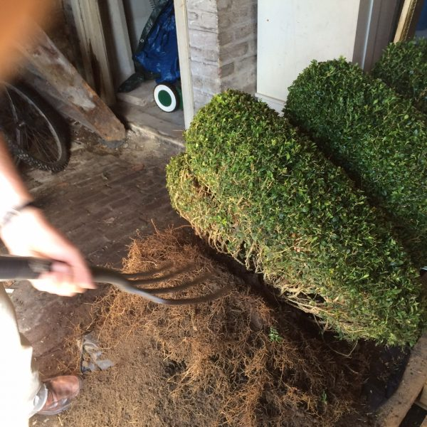 Root trim for spiral topiary