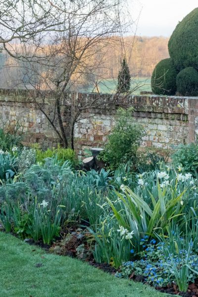 How to plant spring bulbs with a theme