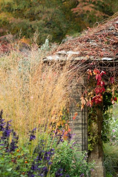 Autumn grasses and climbers