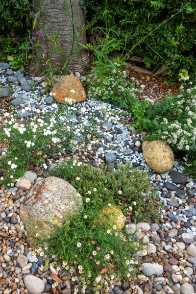 Use gravel to make a shady garden lighter