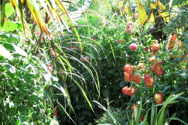 Exotic garden at Great Dixter