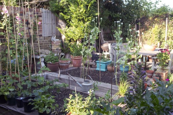 Where to put your kitchen garden.