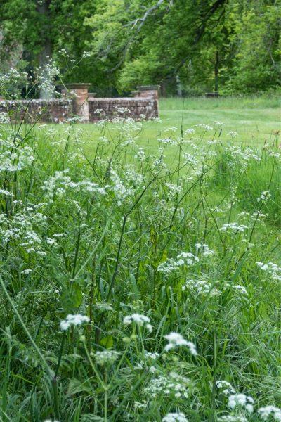 Meadow lawn