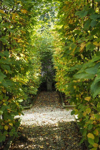 hornbeam hedge 2 and sculpture mark lane 1