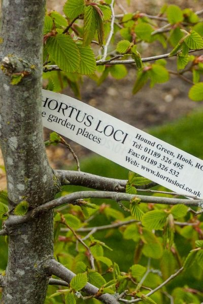 Online plants for sale from Hortus Loci