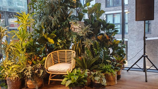 Houseplant installation