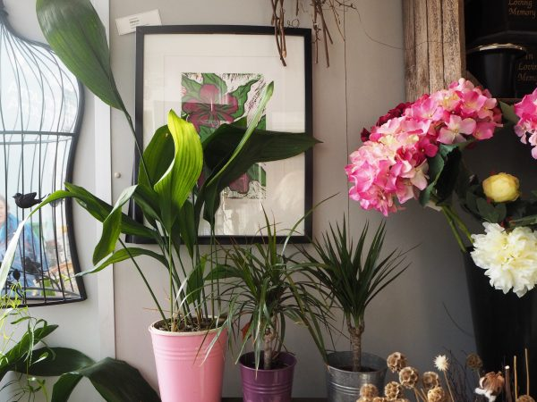 Jamie Butterworth's Top 5 House Plants