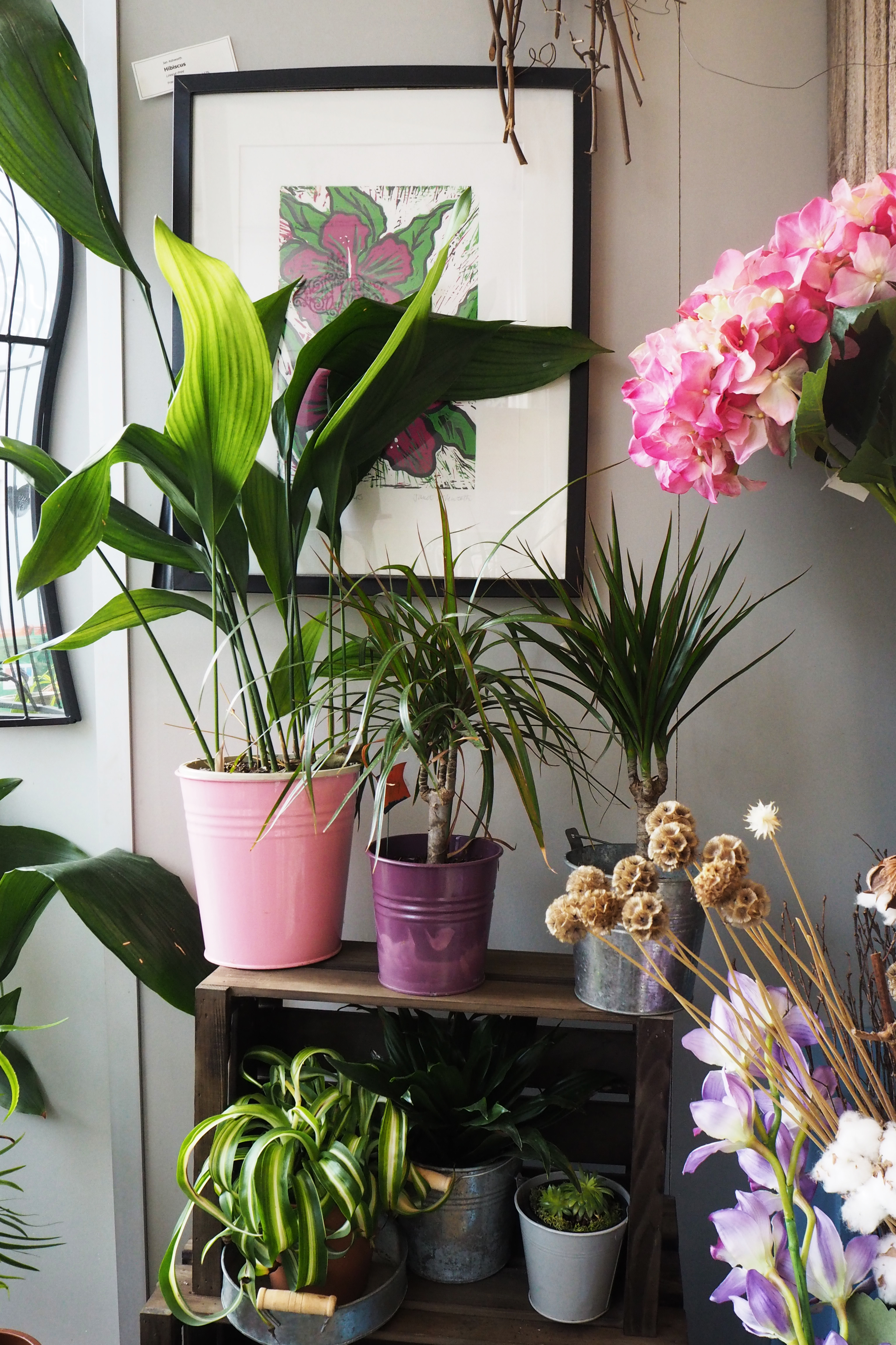 1970s houseplants - aspidistra and spider plant