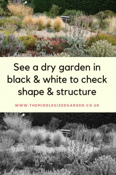 Use shape and structure in a dry garden