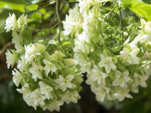 Discover unusual cultivars