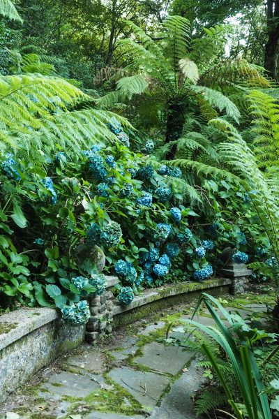 Use traditional plants with exotic shapes #gardendesign