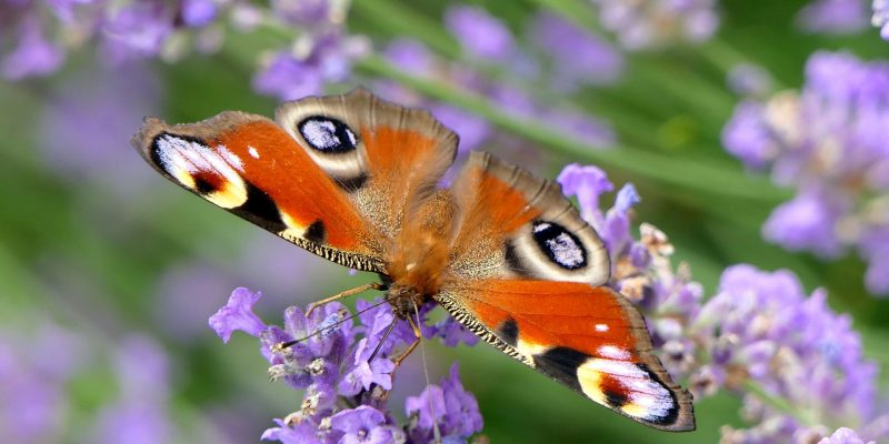 Why you need a butterfly garden – and how to plant it