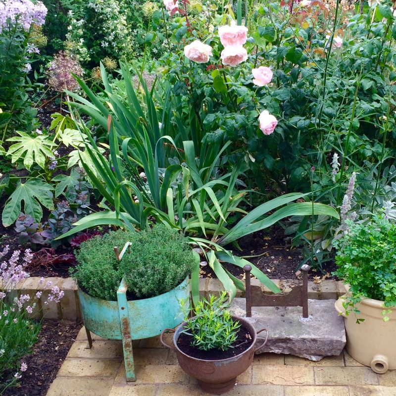Herb garden in upcycled containers