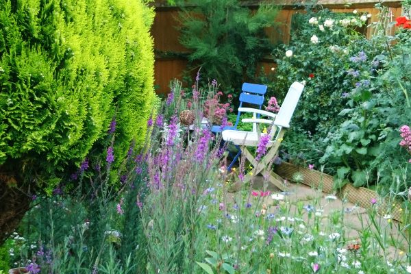 Self-seeders and pretty weeds fill a garden for free