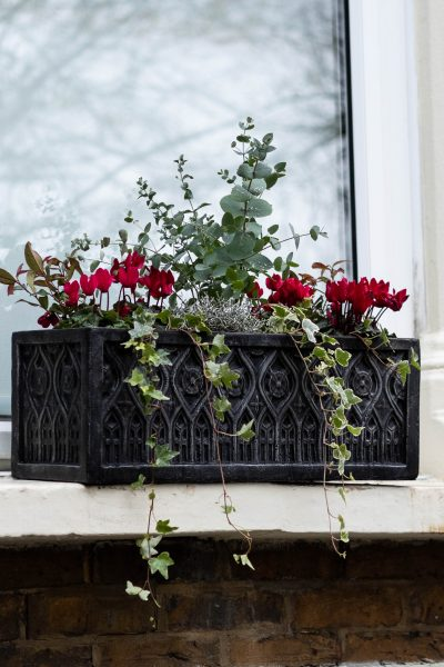 Water a winter window box when it's in situ