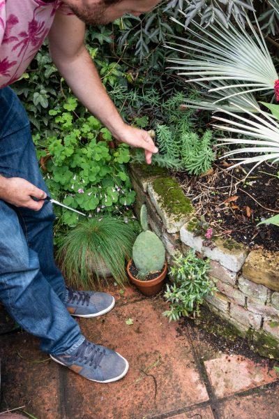 Jack Wallington garden weeds
