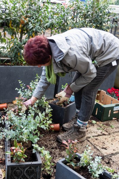 Tips on planting a winter window box