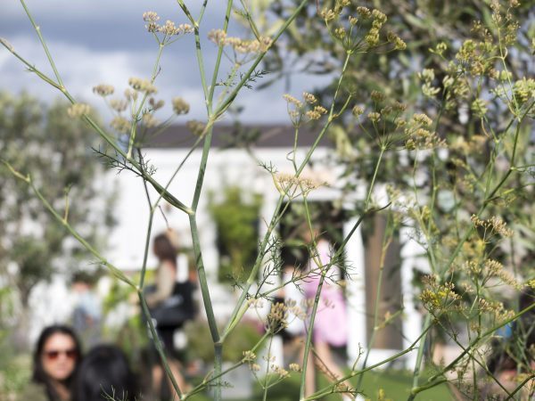 The John Lewis Roof Garden