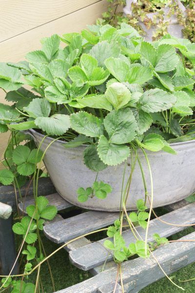 Container vegetable garden ideas