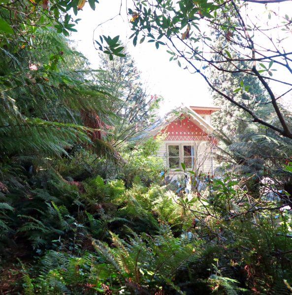 Tips on restoring an overgrown garden