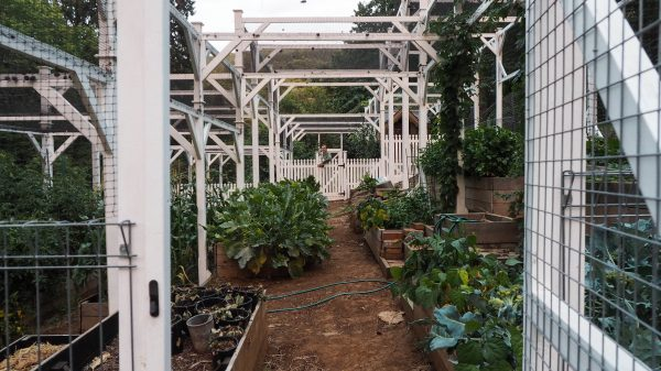 DIY in the garden - a netted enclosure