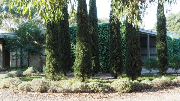 Plant Italian cypress in 3s or 5s. #gardendesign