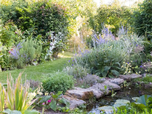 Hardy native hedging for exposed gardens
