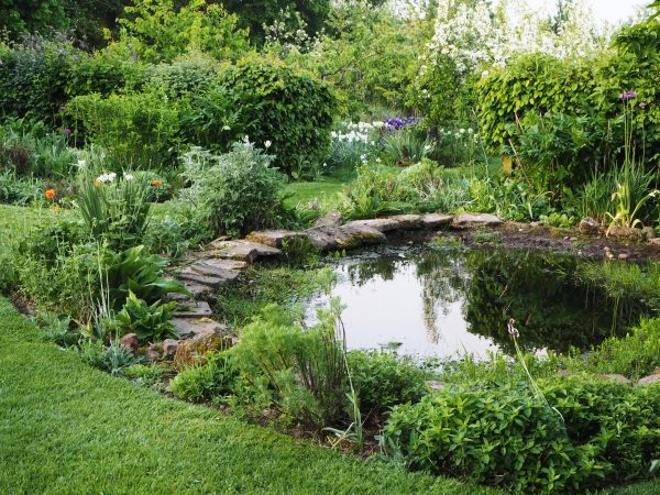 Do you want a natural-looking pond or a designed one? #backyard #gardendesign