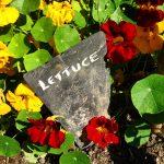 garden labels
