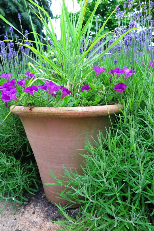 Low Maintenance Garden Pots, Tall Potted Plants Patio Privacy Uk