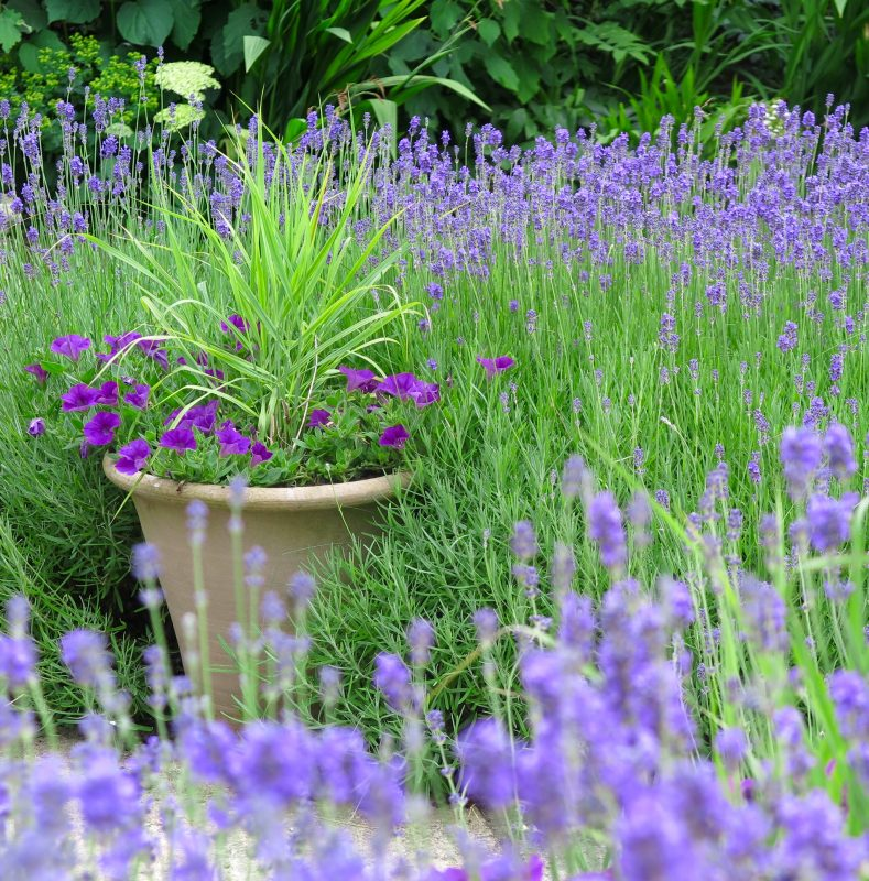Ideas for pots and container gardens