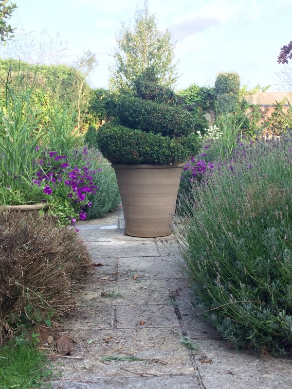 How to prune English lavender