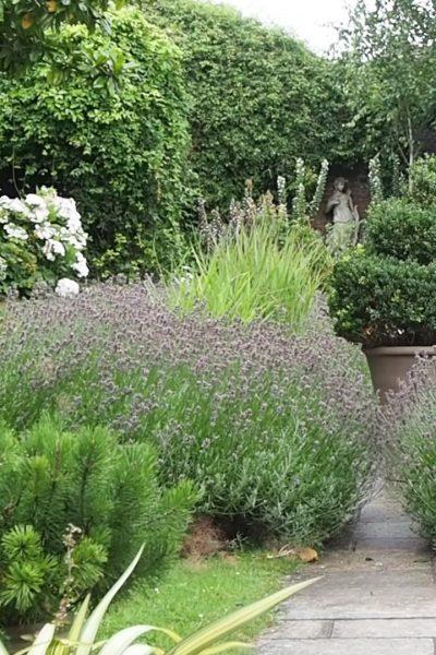 Overgrown pergola
