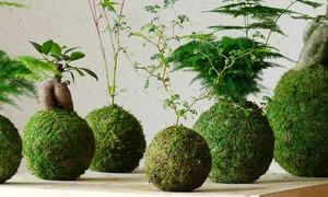 New Contemporary Garden course offer