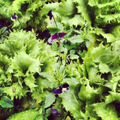 Growing your own salad is environmentally friendly
