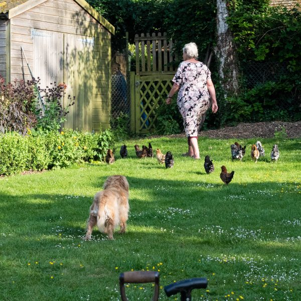 Liz Bradley's bantam hens