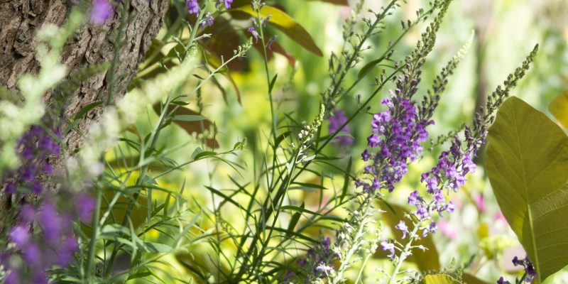 An easy tip for weeding without chemicals