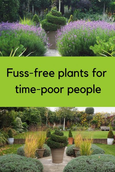 Brilliant Low Maintenance Plants For Beautiful Gardens The