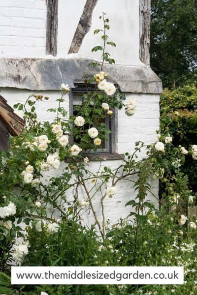 White roses on a white house