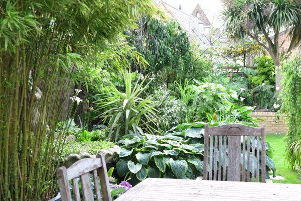 Exotic garden planting