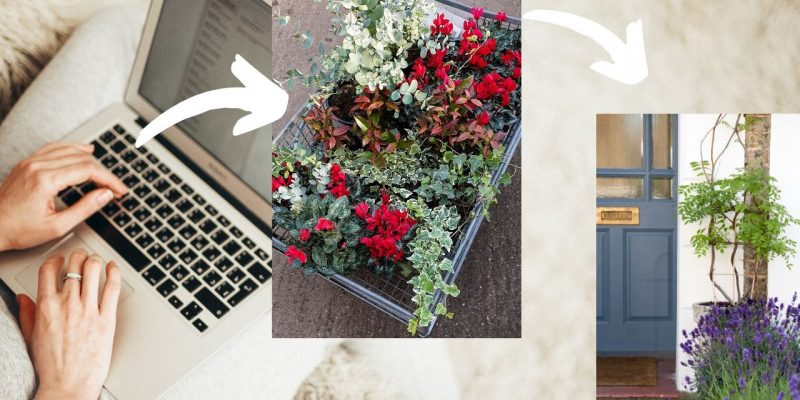 Can you buy plants online?