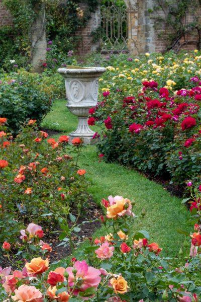 Urn in rose garden