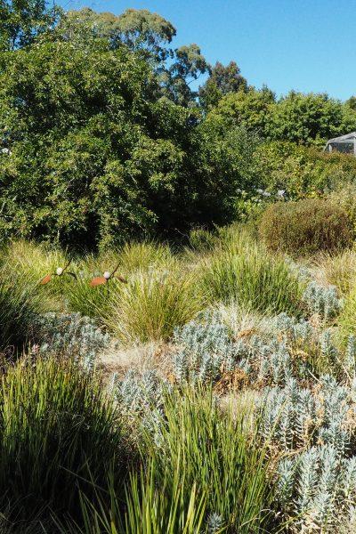 A grey water garden watering system #gardening #backyard