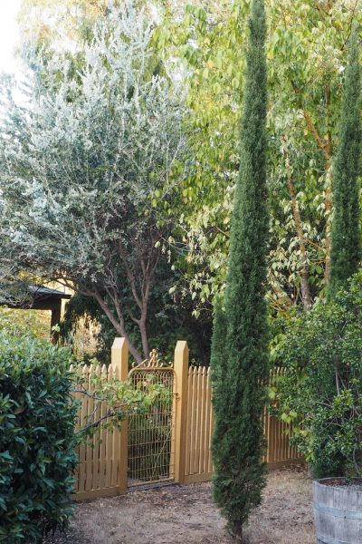 Paint your gate and fence #gardendesign