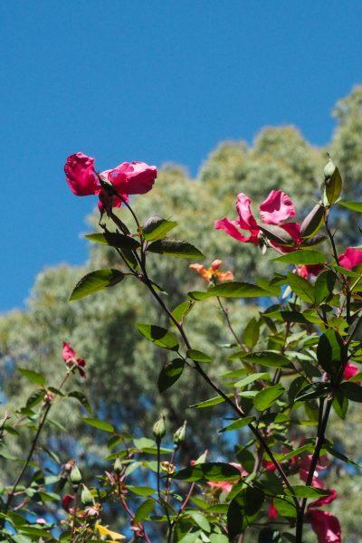 Plant for drought #gardentips