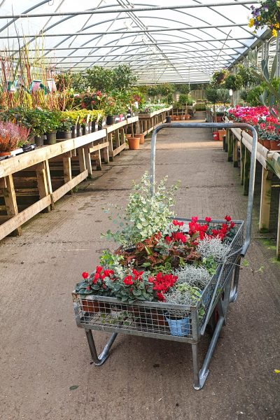Shopping for plants at Meadow Grange